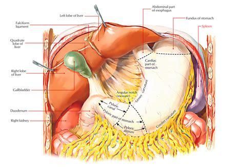 vasculis colon pain picture 2