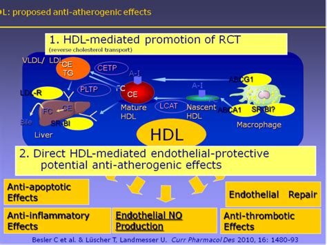 what does it mean when cholesterol hdl and picture 1