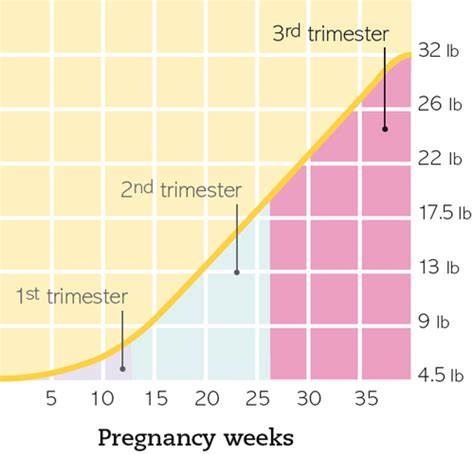 weight gain during your first trimester picture 4