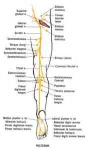 sciatic nerve pain relief picture 3