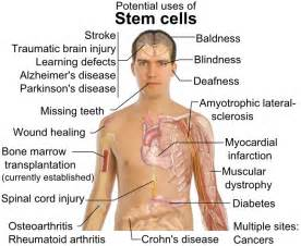 what is bone & bone marrow homeopathic used picture 13