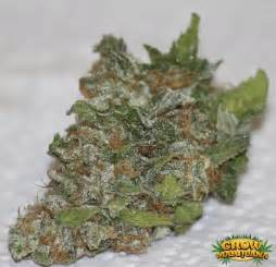 bud or buds or marijuana or pot super picture 1