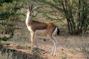 deer farm in pakistan picture 10