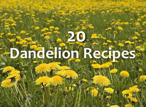 dandelion recipes picture 2