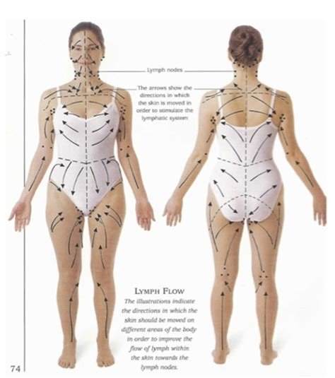 cellulite lymph system picture 9