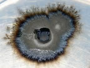mycorrhizal fungi picture 9