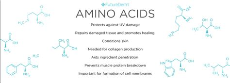 ageing amino acids picture 9