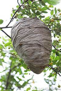 bee hives pictures picture 13