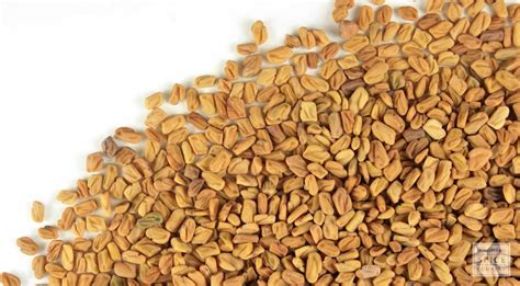 fenugreek seed picture 5