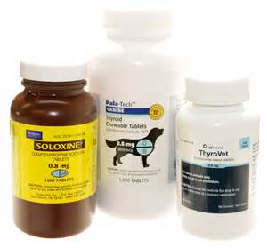 hypothyroidism dogs and medication picture 1