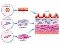 probiotics colon polyp picture 5