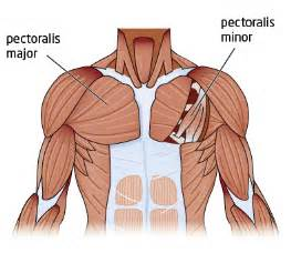 Chest muscle strain picture 2