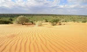 desert picture 13
