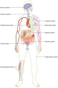 normal thyroid blood flow picture 13