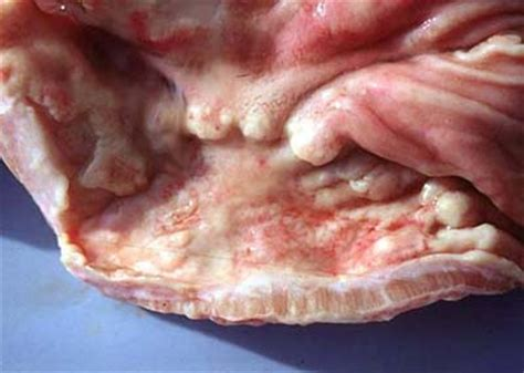 canine intestinal pain picture 2