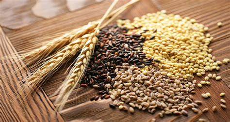 whole grains and fat burning picture 11