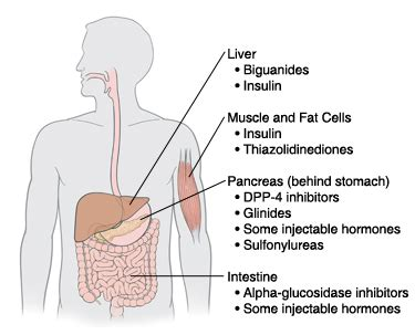 prescription drugs that can affect or delete t-cells in the human picture 7