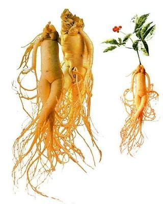 does red ginseng extract raise blood pressure? picture 12