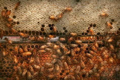 honey bees for sale in alabama picture 2