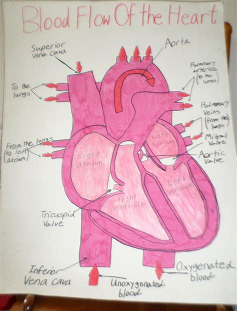 can i buy circu aid for blood circulation picture 12