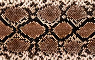 snake skin s picture 14