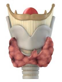 about thyroid picture 9