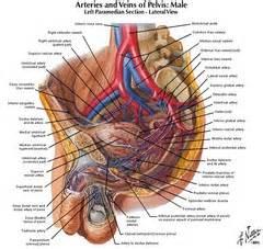 urethral prostate stimulation picture 5
