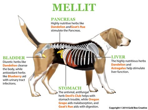 canine liver disease research picture 9