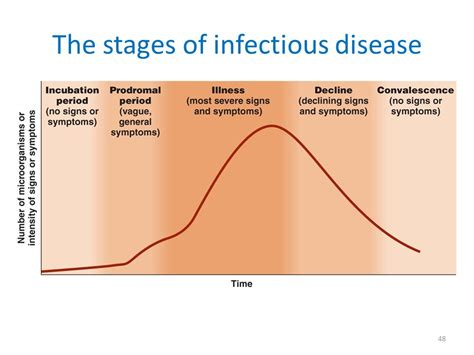 stages of microbial infection picture 7