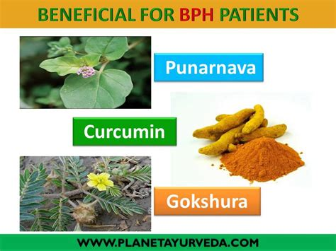 treatment of enlarged prostates through indian herbal picture 8