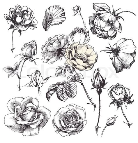 bladder illustrations and clip stock illustrations art picture 2