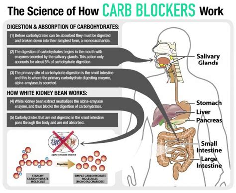 carb blockers picture 15