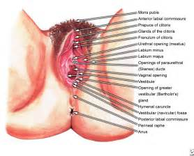 diagram of a penis hitting the g spot picture 7