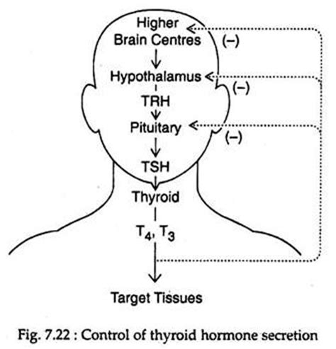 super high thyroid hormone picture 17