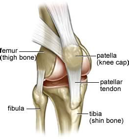 diagram of a knee joint picture 5
