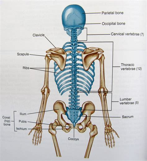 diagram of knee joint picture 19