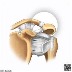 acromioclavicular joints picture 3
