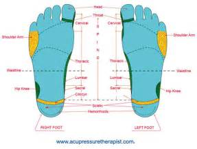 ankle joint diagram picture 13