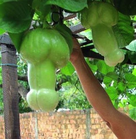 cucumber shaped penis picture 13