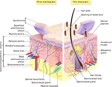 structure of skin modules picture 1