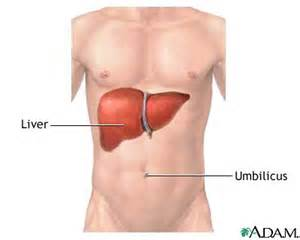 where is the human liver located picture 14