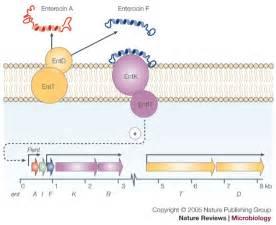 formest probiotic picture 1