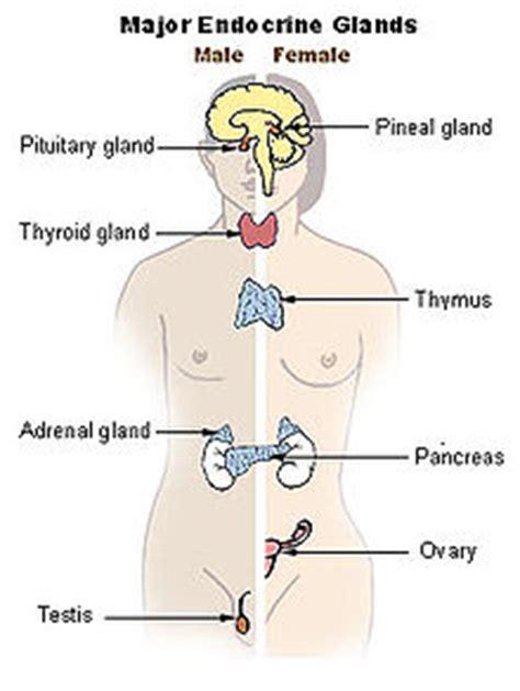 adrenal gland picture 10