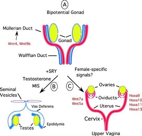 sintomas ng may cholesterol picture 7