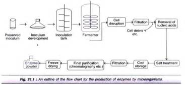 improvement of oil production using microbial enzymes picture 2