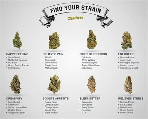 how much pot to smoke for pain relief picture 10