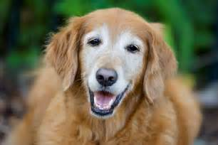 aging dogs picture 11