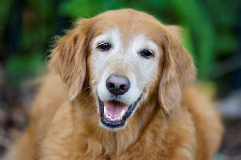 aging dogs picture 7