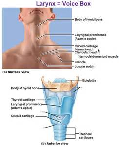 bone loss and thyroid picture 3