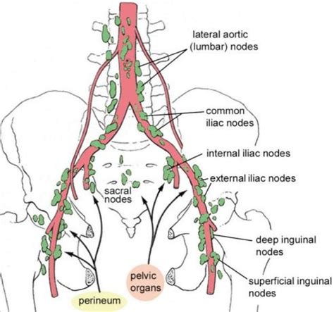 ovary and uterus cleanse picture 2